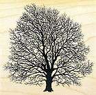PSX K 1457 BLACK WALNUT TREE Rubber Stamp / NATURE LANDSCAPE