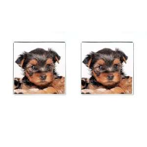 Yorkshire Terrier Puppy Dog 8 Square Cufflinks F0655