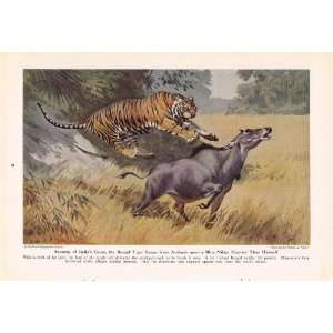 1943 Bengal Tiger   King of Cats and His Court   Vintage Walter A