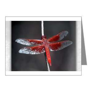 Note Cards (10 Pack) Red Flame Dragonfly